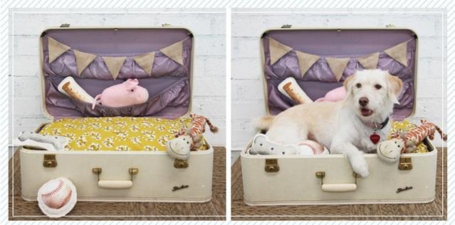 Hô biến vali cũ thành vật dụng siêu xinh 10